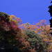 報国寺の紅葉