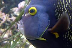Aquarium de Paris  (23) (Mhln) Tags: paris aquarium requin poisson trocadero poissons meduse 2015 cineaqua