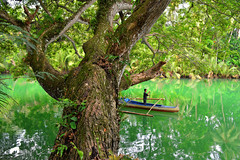 Wild Philippines (free3yourmind) Tags: wild man green nature water river palms boat philippines bohol loboc