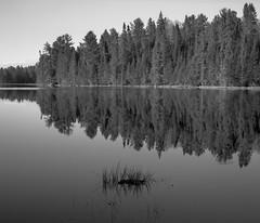 Amikeus Lake (KevinCollins00) Tags: blackandwhite bw lake ontario canada film mediumformat pond fuji pentax beaver 120film trail neopan 6x7 analogphotography algonquinpark acros100 filmphotography pentax6x7 provincialparks ontarioparks amikeus