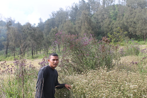 "Pendakian Sakuntala Gunung Argopuro Juni 2014 • <a style=""font-size:0.8em;"" href=""http://www.flickr.com/photos/24767572@N00/26555919444/"" target=""_blank"">View on Flickr</a>"