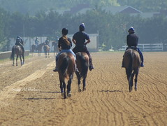 Back to the Barn (susanmbarlow) Tags: horse racetrack photograph horseracing delaware racehorse thoroughbred equus delawarepark equidae thoroughbredracing equusferuscaballus delparkracing