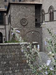 Viterbo_10_1240 (Dubliner_900) Tags: lavender olympus viterbo lazio tuscia micro43 omdem5markii mzuikodigitaled1240mm128pro