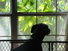 1464102350_2016_May_24_11-05-50_window152 (yclept8) Tags: julie doberman