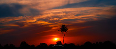 Some where in Sindh (Fortunes2011. Haunting Nostalgia) Tags: sunset sky tree clouds palm nikkor sindh 2351 fortunes2011nikon