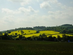 Rapeseed Fields(3) (JP Photography74) Tags: uk england yellow outdoors landscapes countryside farmland fields scenics rapeseed staffs