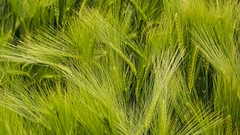 Fifty Shades of Green (Yasmine Hens) Tags: green nature europa flickr belgium sony ngc vert namur hens yasmine nuance wallonie iamflickr flickrunitedaward fiftyshadesofgreen sonyrx10m3 hensyasmine