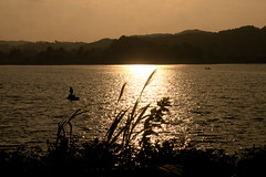 Evening scene (y.kobayashi) Tags: autumn orange lake nature water landscape lumix panasonic chiba dmcg6
