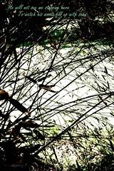 Woodland (Pat's_photos) Tags: woodland poem westonbirt