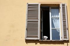 Il sabato in citt #4 (martmagg) Tags: sabato citt parma cane finestra dettagli