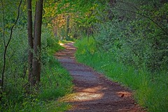 Early Morning on the Trail (Jan Nagalski) Tags: sunlight green bird nature spring colorful cardinal path michigan perspective peaceful trail treetrunk dew morningsun brightsun uncrowded kensingtonmetropark heavydew emptytrail jannagal jannagalski