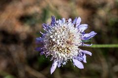 67Jovi-20160529-0039.jpg (67JOVI) Tags: macro valencia flora flor albufera racodelolla