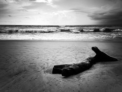 Nothing's permanent (VaibhavSharmaPhotography) Tags: blackandwhite surreal driftwood trippy stark bnw