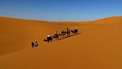 Sahara Camel Trekking (macloo) Tags: travel camping sahara trek desert morocco camels