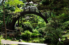 Japanese Tea Garden (dalecruse) Tags: sanfrancisco california green nature japan garden outdoors japanese japanesegarden tea outdoor japaneseteagarden teagarden lightroom japanesetea