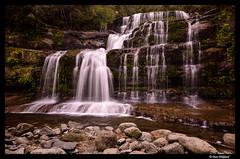 Water flowing in Liffey falls (Dan Wiklund) Tags: longexposure nature water forest landscape waterfall stream australia tasmania d800 liffeyfalls 2016