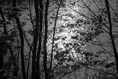 Impressions of Gent (John fae Fife) Tags: blackandwhite bw canal belgium noiretblanc nb gent xe2 fujifilmx