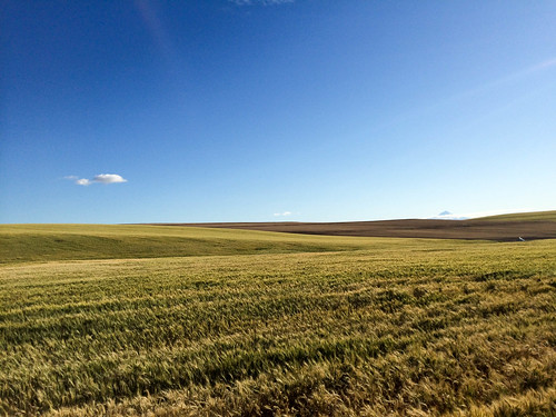 "Oregon Stampede • <a style=""font-size:0.8em;"" href=""http://www.flickr.com/photos/98226741@N00/27621535792/"" target=""_blank"">View on Flickr</a>"