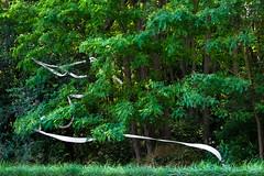 Lotus (Clydomatic) Tags: nature vert arbres blanc feuillage papiertoilette