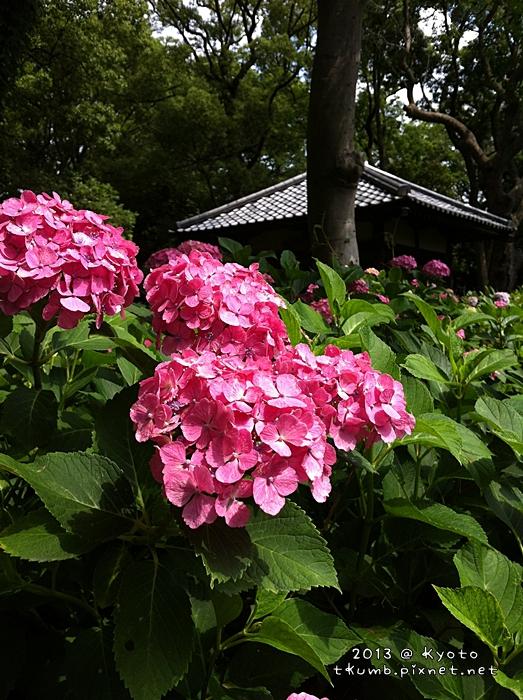 2013藤森神社7.jpg
