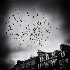 These Birds Have Flown (Fuji and I) Tags: urban blackandwhite monochrome birds skies flight alexarnaoudov