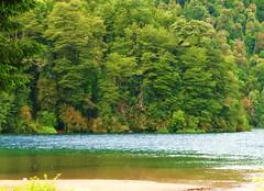 Lago Pirihueico,bosques coihues,Puerto Fuy,Chile (Gabriel mdp) Tags: verde green lago pirihueico nature naturaleza paisaje landscape pueblo puerto fuy contrastes vegetacion bosques coihues