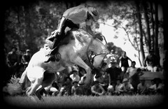 El tordillo (Eduardo Amorim) Tags: brazil horses horse southamerica criollo caballo uruguay cheval caballos cavalos pferde cavalli cavallo cavalo gauchos pferd hest hevonen chevaux gaucho  amricadosul hst uruguai gacho  amriquedusud  gachos  sudamrica suramrica amricadelsur  sdamerika crioulo caballoscriollos criollos jineteada   cerrolargo americadelsud gineteada  crioulos cavalocrioulo americameridionale caballocriollo eduardoamorim cavaloscrioulos  pasodeldragn plcidorosas