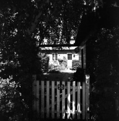 Up the Garden Path (holtelars) Tags: blackandwhite bw 120 6x6 mamiya tlr film monochrome analog mediumformat square denmark squareformat analogue twinlensreflex mamiyac330 gardenpath niv foma f35 100iso fomapan100 twinlens filmphotography 65mm rodinalspecial studional fomapan mamiyasekor classicblackwhite homeprocessing filmforever r09spezial larsholte fomapan100professional compardr09spezial