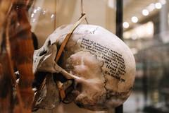 QF4C7697 (leslilundgren) Tags: skull pittriversmuseum