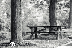 Picnic Table (JohnBorsaPhoto) Tags: wood trees summer white plant canada black tree nature grass electric america forest project river table landscape lunch outside outdoors picnic power dam united border canadian niagara eat hydro sit land trunk gorge states powerplant hydroelectric