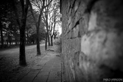 On the wall (Pablo Arrigoni) Tags: street shadow bw white black brick argentina argentine wall america canon arbol outside eos grey gris calle arquitectura arboles shadows exterior outdoor south sombra bn sidewalk tre sombras vereda afuera 18135 70d eos70d