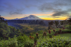 View Mount Agung from Mahagiri (Pandu Adnyana (thanks for 100K views)) Tags: morning bali cloud field sunrise indonesia restaurant rice mount valley rendang agung karangasem