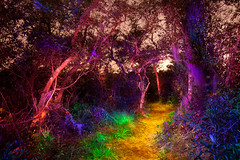 Jason-D-Page-Painted-Forest (Jason D. Page) Tags: longexposure inspiration lightpainting color night forest colorful magic dream vivid fantasy slowshutter dreamscape lightart jasonpage lightpaintingphotography jasondpage