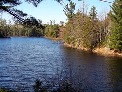 Sunny Day At Long Pond Camp. (dccradio) Tags: trees lake ny newyork tree nature water pond natural scenic adirondacks upstateny greenery duane bodyofwater northernny