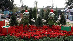 (MrDizneyKing) Tags: world park christmas street new xmas vacation flower art mouse orlando epcot florida disneyland character magic main kingdom disney mickey disneyworld hollywood minnie studios walt fantasyland mrdizneyking