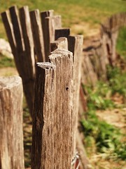 Barrire (whitetownn) Tags: wood nature fence wooden du pont bois gard nmes barrire hx20v