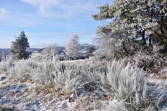 DSC_1487 (obbi53) Tags: eis winter2010 imschnee