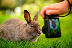 SAY CHEESE !! (どこでもいっしょ) Tags: park canada rabbit animal bc bokeh richmond bunnie phototaking saycheese minorupark