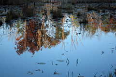 IMG_1065 (Dan Correia) Tags: amherst shadows swamp reflection 15fav topv111 topv333 topv555 topv777