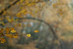 Herfst in Beetsterzwaag (Floortje Walraven) Tags: autumn tree forest leaf herfst boom medal blad thumbsup leafs bos friesland beetsterzwaag bladeren