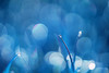 Blue Dew (j man.) Tags: life lighting morning blue friends light color macro art texture nature water colors grass closeup composition lens photography droplets drops focus flickr dof artistic bokeh pov background details perspective dream favorites clarity blurred 11 drop depthoffield pointofview sp ii dew views di if dreamy f2 tamron hue tone comments ld slt jman macrophotography af60mm mygearandme flickrbronzetrophygroup a65v
