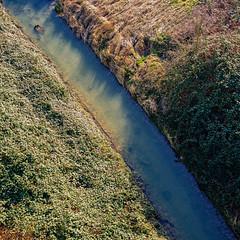 crap. (angsthase.) Tags: green 6x6 water germany square deutschland weeds wasser shadows nrw grün schatten ruhrgebiet dortmund emscher 2014 ruhrpott mft micro43 lumixg20f17 epl5 olympuspenepl5