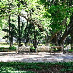 Historia sin fin // El respiro de las almas (narailuna) Tags: parque rboles sin fin historia historiasinfin