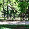 Historia sin fin // El respiro de las almas (narailuna) Tags: parque árboles sin fin historia historiasinfin
