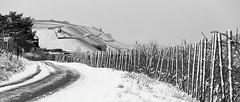 Snow (mexou) Tags: winter bw vineyards wormeldange 135mmf20 koeppchen 5diii