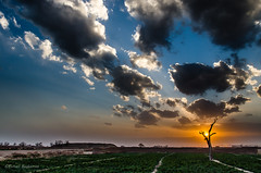 Another Sunset (Esmaeel Bagherian) Tags: sunset sun tree nikon   2015 1393 18105mm   d7000  ebagherian esmailbagherian