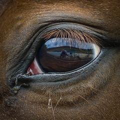 Selfie (fotomanni.de) Tags: familie spiegelung pferd radtour manfred selfie radfahren radeln adfc