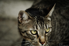 De la vuelta (joeovario) Tags: gatos animales nikond700