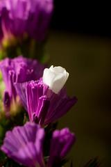 day 38 flower