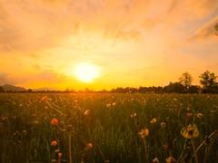 The Evening (florianplener) Tags: wiese blumen sonne